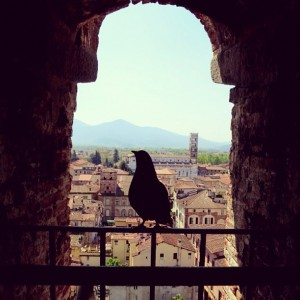 Bird's eye view in Lucca