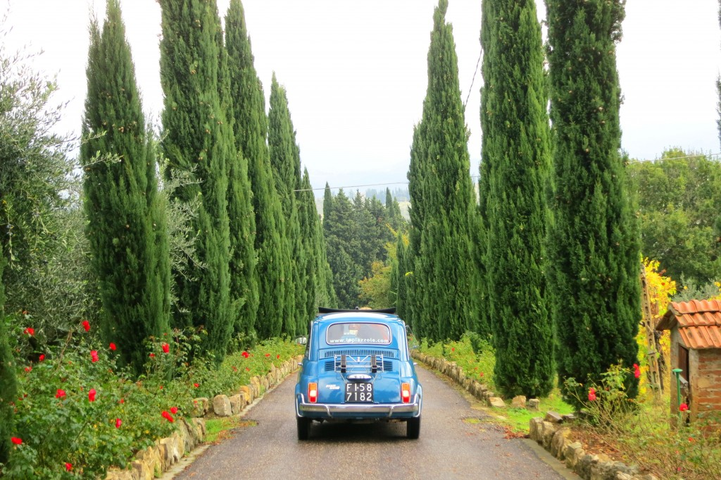 Fiat and cypress trees