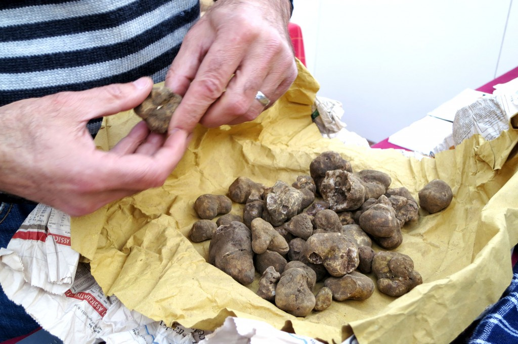 white truffles in Tuscany