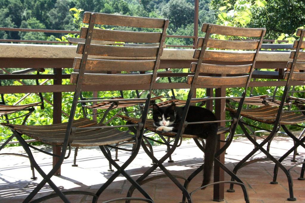 Cats of Maremma