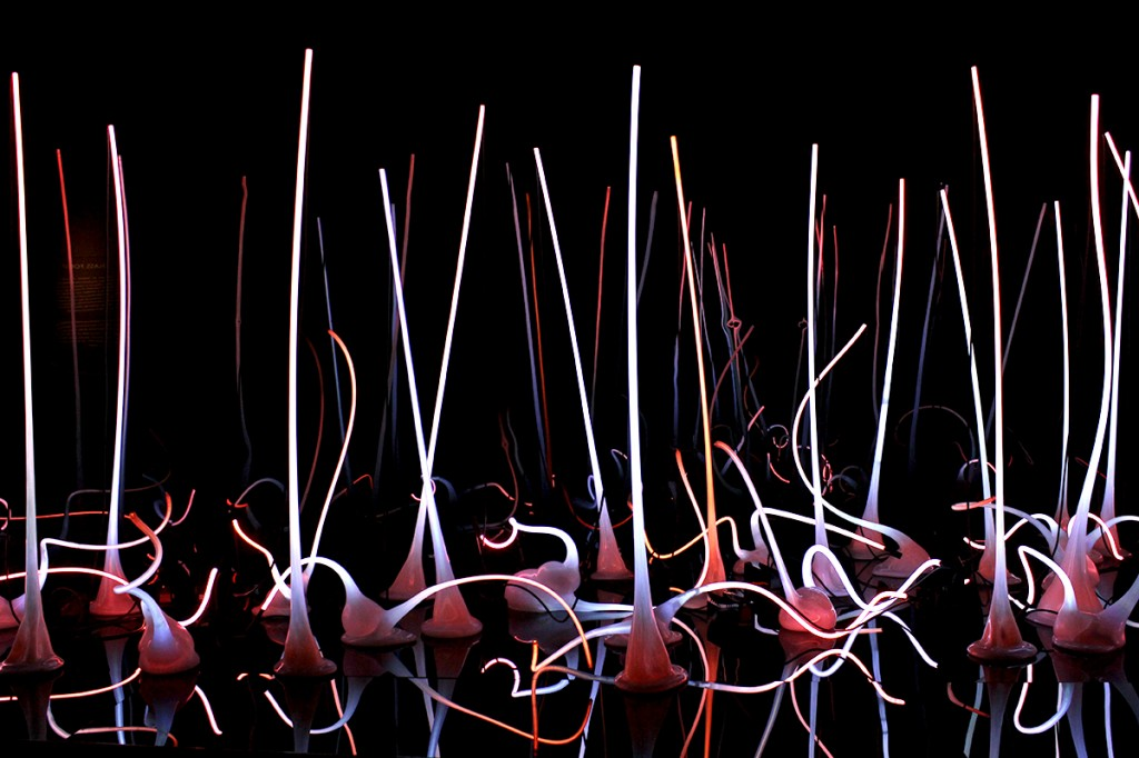 Chihuly sculptures at the Seattle Center